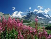 Alberta © Tourism Jasper